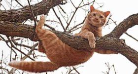 ELEGANTNE, ŽILAVE I NEODOLJIVE Kako mačke prživljavaju padove koje bi sigurno ubile svaku drugu životinju!