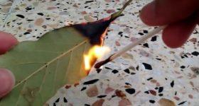 KADA KRENE PO ZLU: Zapalite list lovora u sobi i posmatrajte šta će se desiti nakon samo PAR MINUTA